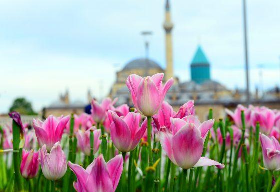 Genç İmam Hatipliler Derneği Konya İl Temsilciliği, Konya'yı Tanıttı!